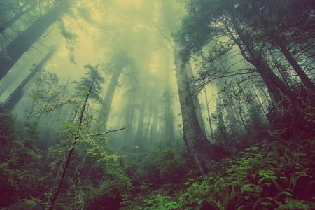 Les 5 plus belles forêts de Belgique !